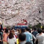 '가슴이 설렌다'…꽃향기 가득한 경남 봄축제 풍성