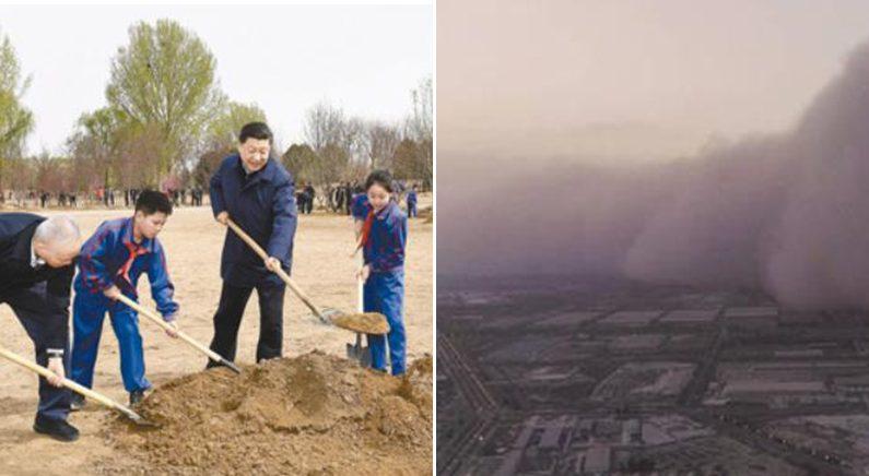 스모그·황사 속 나무 심은 시진핑, '국토 녹색화' 강조