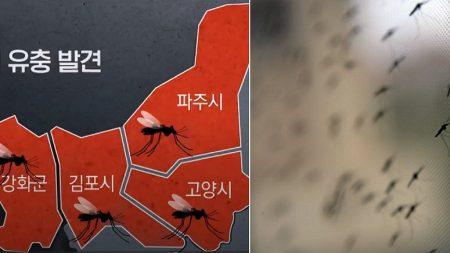 수도권에서 '말라리아' 모기 유충 집단으로 발견됐다