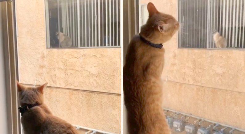 창 너머 이웃집 고양이를 사랑한 반려묘, 현실 데이트 성사시킨 집사들