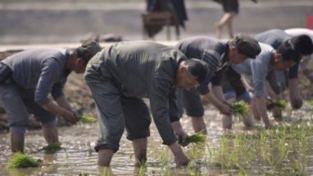 """""""식량난"""" 주장 북한, 지난 1~4월 중국에서 '담배' 더 많이 수입"""