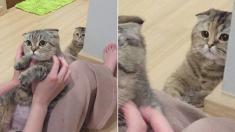 다른 친구 예뻐하는 집사 바라보며 시무룩해진 고양이의 현실 표정