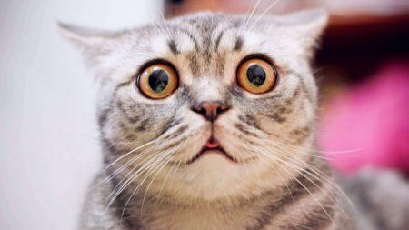 """""""고양이 수명 30살까지 늘리는 '치료약' 개발된다"""""""