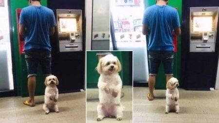 ATM기서 돈 뽑는 주인님 지키려 앞발 쫑긋 든 '보디가드' 강아지