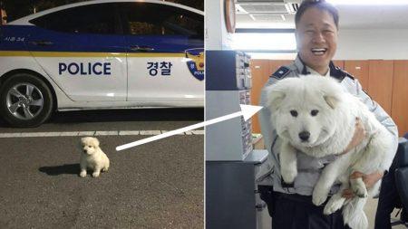 """""""순찰 돌던 경찰들이 버려진 아기 '강아지'를 주웠는데, '북극곰'이 되었어요"""""""