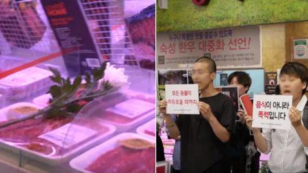 마트 정육코너 앞에서 '국화꽃' 들고 시위한 동물권 활동가들 (영상)