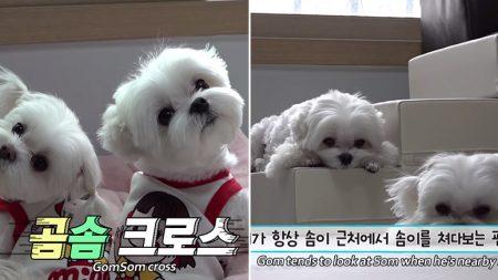 """""""너에게 시선고정"""" 현실에는 없는 '쏘 스윗' 개오빠 '곰이'와 동생 '솜이'의 일상"""