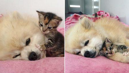 하나뿐인 오빠 잃고 날마다 눈물 펑펑 쏟는 아기 고양이 '수호천사' 돼 준 강아지