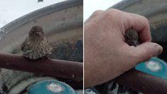 쇠파이프에 얼어붙은 참새의 두발을 따뜻한 '입김'으로 녹여준 남성 (영상)