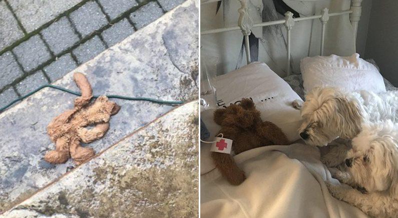 간밤에 실종됐다가 구조된 애착 곰인형 '발 동동' 구르며 간호하는 댕댕이들