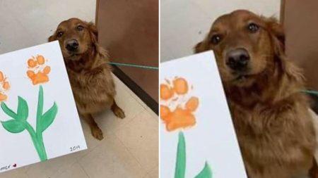 유치원에서 발 도장 찍어 완성한 '꽃그림' 엄마에게 선물한 댕댕이의 표정