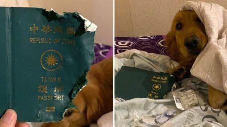 여권 물어뜯은 강아지 덕분(?)에 중국 우한 여행 강제 취소된 가족