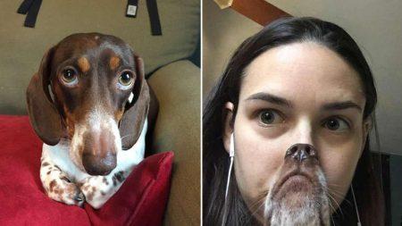함께 사진 찍는 주인 보려 머리 뒤로 젖혔다가 '굴욕샷' 남긴 강아지