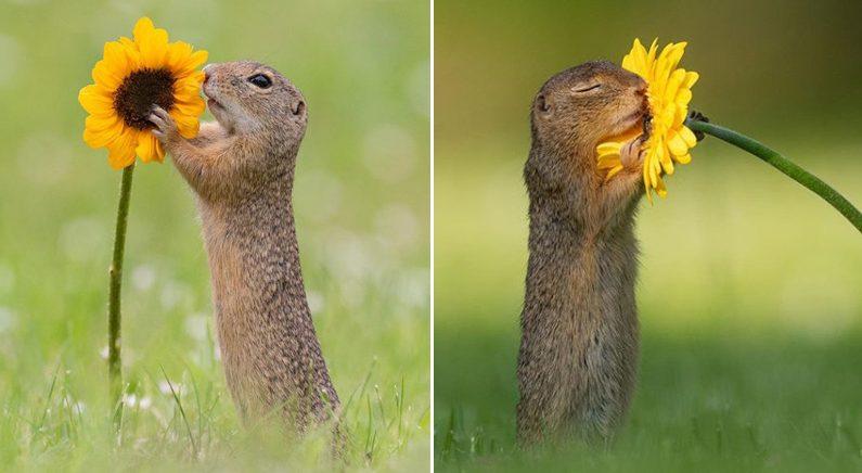 꽃향기 궁금해 두 눈 꼭 감고 감상하는 '귀염뽀짝' 아기 다람쥐