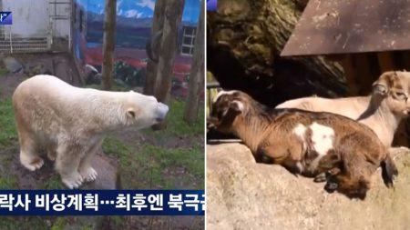 경영난에 700마리 동물 순서대로 '안락사' 시키겠다는 독일 동물원