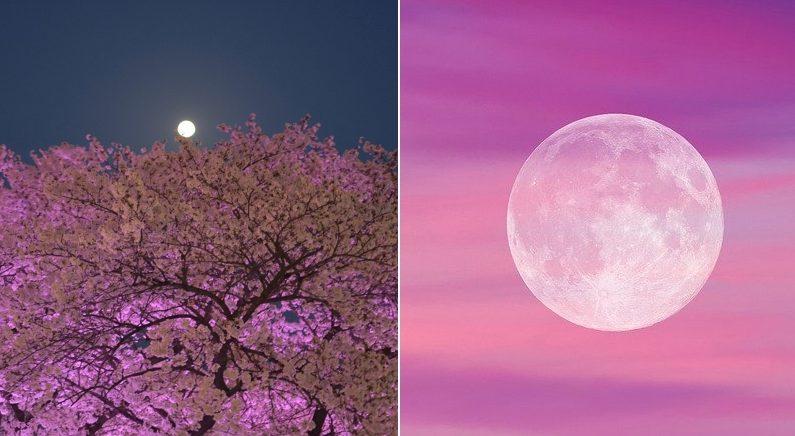 벚꽃 절정인 내일(7일) 밤, 올해 가장 큰 보름달인 희귀 '핑크문' 뜬다