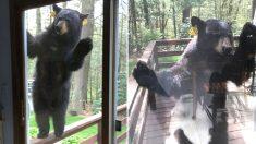 """""""집에서 안 나간 지 열흘 넘었더니 곰이 걱정하면서 찾아왔어요"""""""