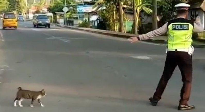 차 쌩쌩 달리는 도로 횡단하는 고양이 위해 직접 '에스코트'해준 경찰