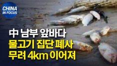 중국 남부 물고기 떼 죽음.. 사체 띠 4km 이어져