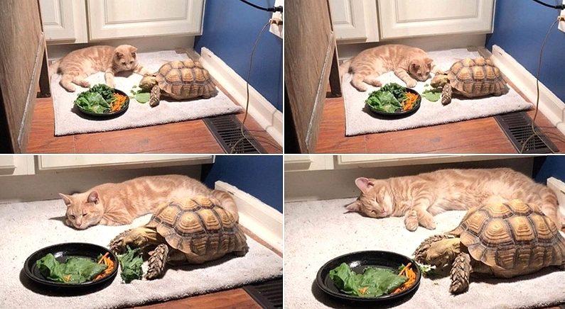 """""""밥 다 먹으면 같이 놀자"""" 거북이 친구 기다리던 고양이의 '세젤귀' 최후"""