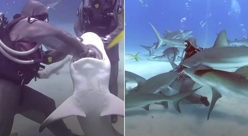 상어 입에 걸려있던 낚시바늘을 빼줬더니, 다음 날부터 다른 상어들도 찾아왔다