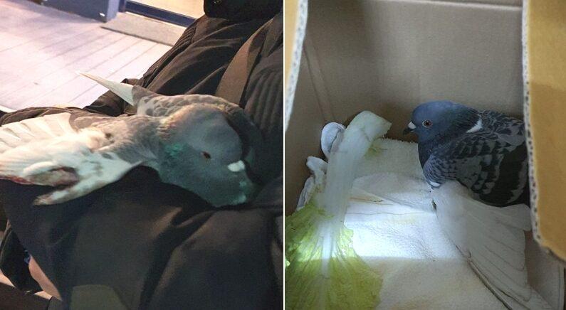 다친 비둘기 품에 안고 집으로 데려온 남편에게 아내가 보인 반응