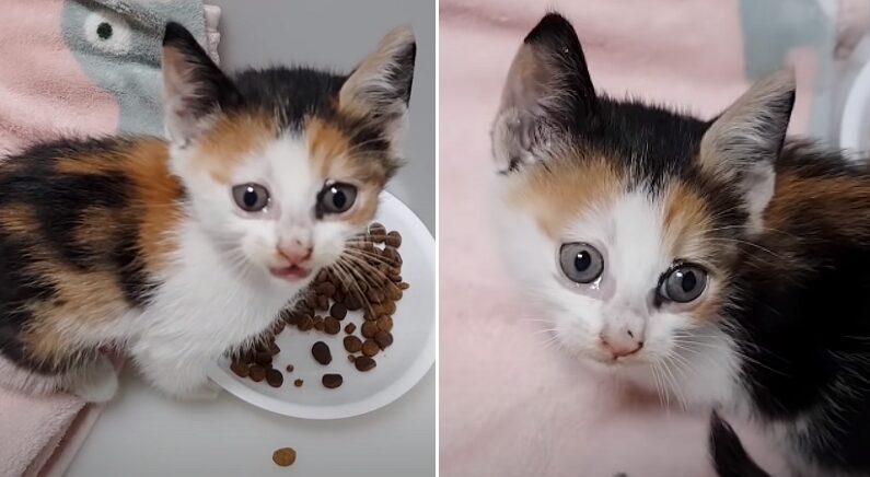 구조된 후 처음으로 사료 먹으며 눈물 그렁그렁 맺힌 고양이 (영상)