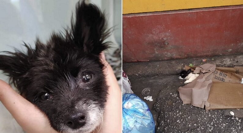 학대당한 채 쓰레기장에 버려져 온몸에 경련 일으키는 아기 강아지의 '눈빛'
