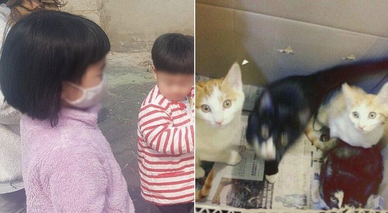 동물병원 수의사 선생님을 활짝 웃게 만든 종이박스 고양이 4마리, 그리고 '손편지'