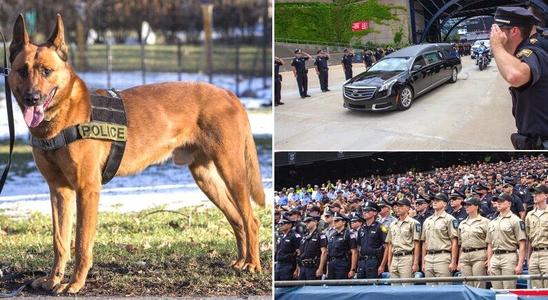 경찰관들 위해 대신 총 맞고 세상 떠난 경찰견에게 '성대한 장례식' 치러주며 예우하는 미국
