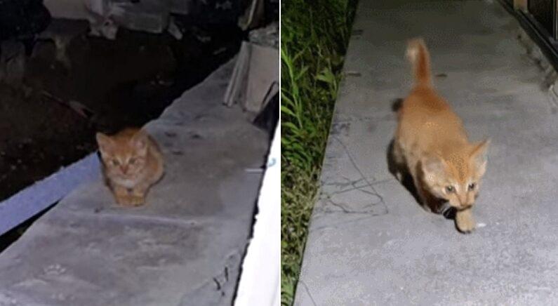 """""""저 좀 키워주세요"""" 엄마한테 버림받고 살고 싶어서 새벽 2시에 사람한테 찾아온 아기 고양이 (영상)"""