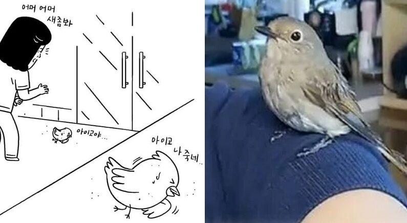 유리창에 부딪혀 쓰러진 산새 발견한 어머니가 '박치기'라 이름 짓고 돌본 뒤 생긴 일