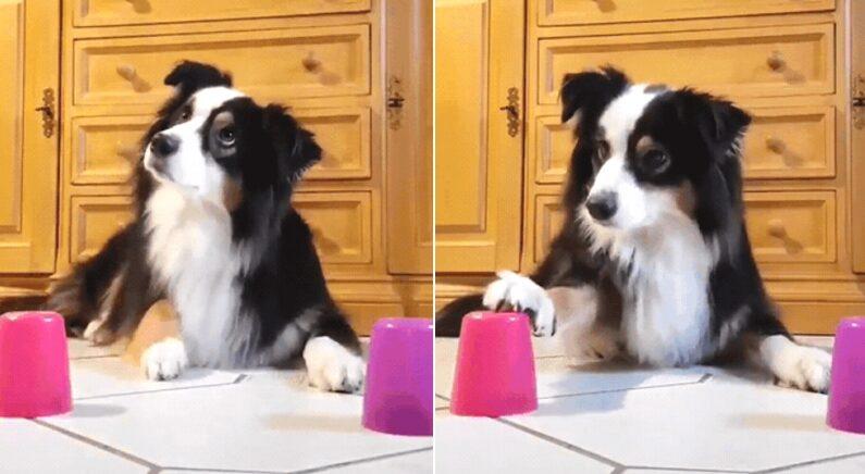 똑똑해서 '야바위' 할 줄 알던 강아지의 '최후'