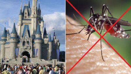 울릉도보다 큰 세계 최대 놀이공원 '디즈니월드'에 모기가 1도 없는 이유