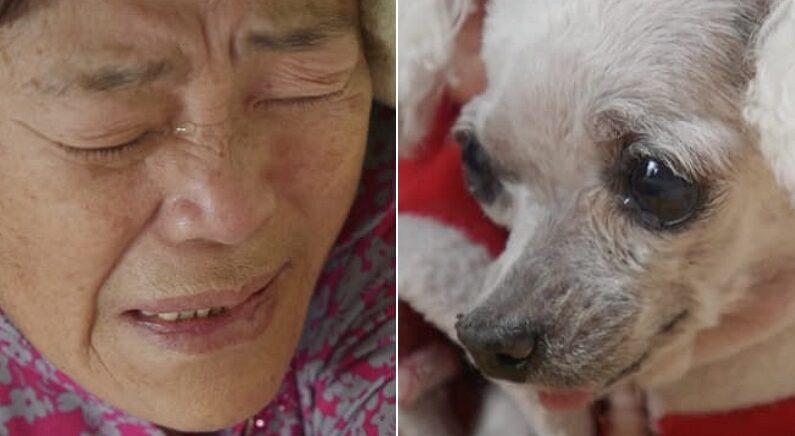 """14년 동안 같이 산 강아지 """"이제 못 키우겠다""""며 할머니가 엉엉 운 까닭"""
