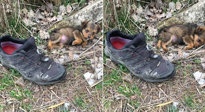 엄마도 없이 길에 버려져 운동화 속에 혼자 사는 아기 강아지가 발견됐다