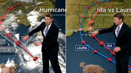 """""""주말에는 폭풍이 오겠습니다"""" 재택근무하던 기상캐스터 강아지가 생방송 중 난입한 까닭"""